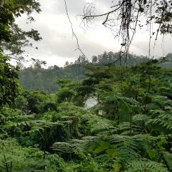 Dschungel-Feeling bei Zomba